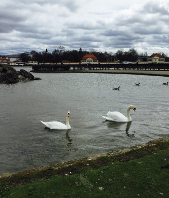 A large number of swans gathered in front of the palace at the center pond.